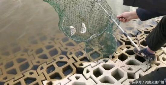 郑州市民贾鲁河边扎堆钓鱼 有人调侃:人比鱼多-5.jpg